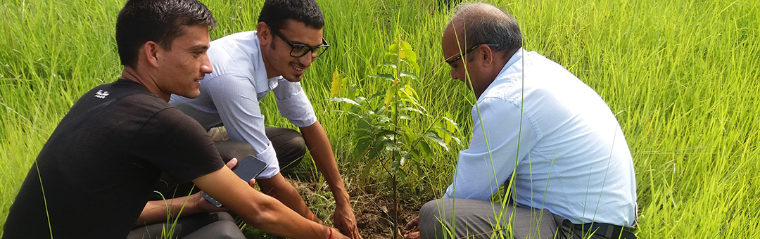 Tree Plantation within the College premises